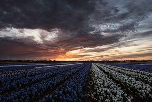 Фото бесплатно пейзаж, поля, нидерланды закат