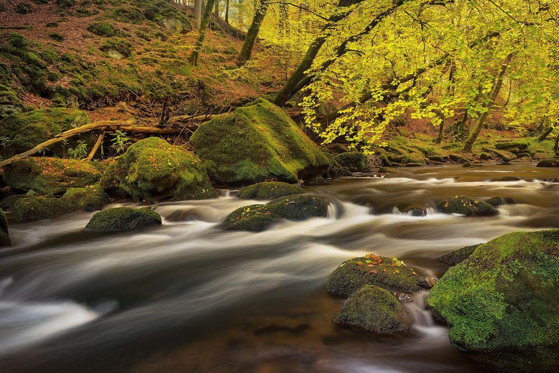 Обои осень, река, лес картинки на телефон