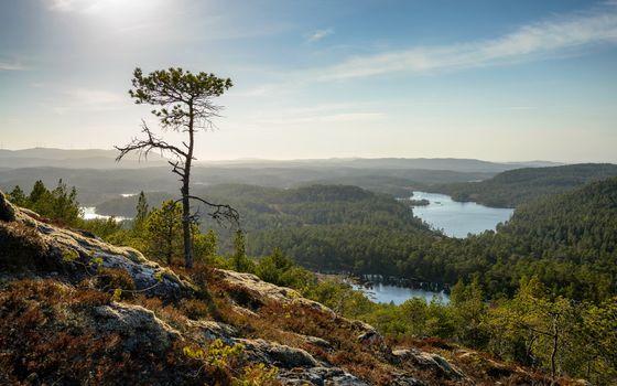 Фото бесплатно простор, вид с горы, лес, деревья, озера, река