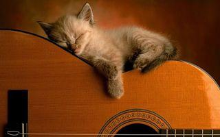 Бесплатные фото котенок,морда,лапы,спит,гитара,струны