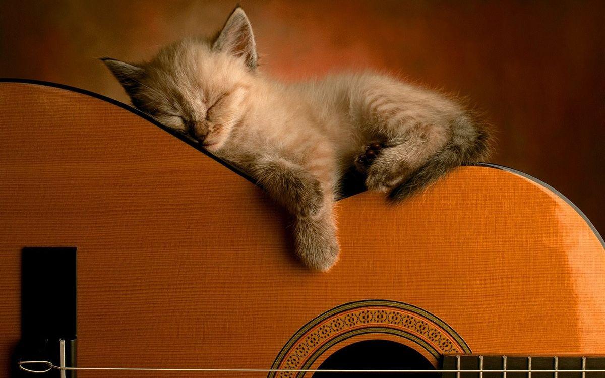 Фото бесплатно котенок, морда, лапы, спит, гитара, струны, ситуации