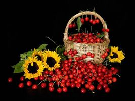 Photo free cherry, basket, sunflowers