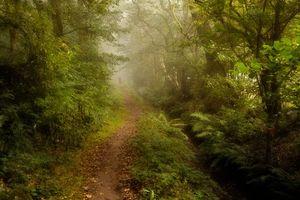 Бесплатные фото лес,деревья,тропинка,туман,природа