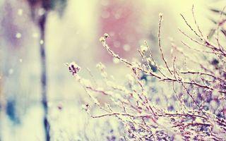 Фото бесплатно лес, ветки, падающий снег