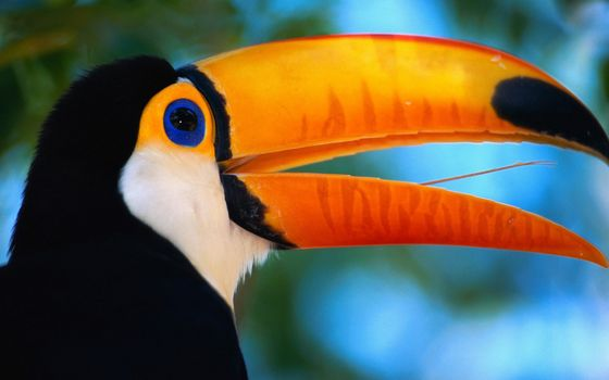 Фото бесплатно голубые, большие, оранжевые
