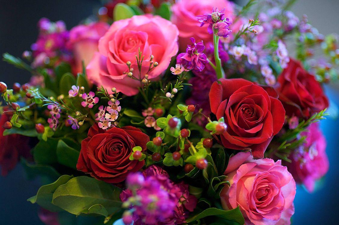 Фото бесплатно : цветок, цветы, флора, роза, розы, букет, цветы