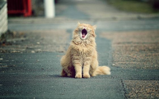 Фото бесплатно кот, рыжий, зевает