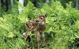 Бесплатные фото олененок,морда,ноги,шерсть,окрас,пятна,трава