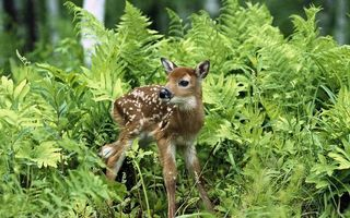 Photo free fawn, muzzle, legs