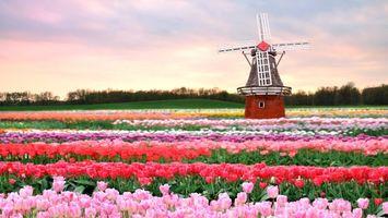 Бесплатные фото поле,цветы,тюльпаны,ветряная мельница,деревья,небо