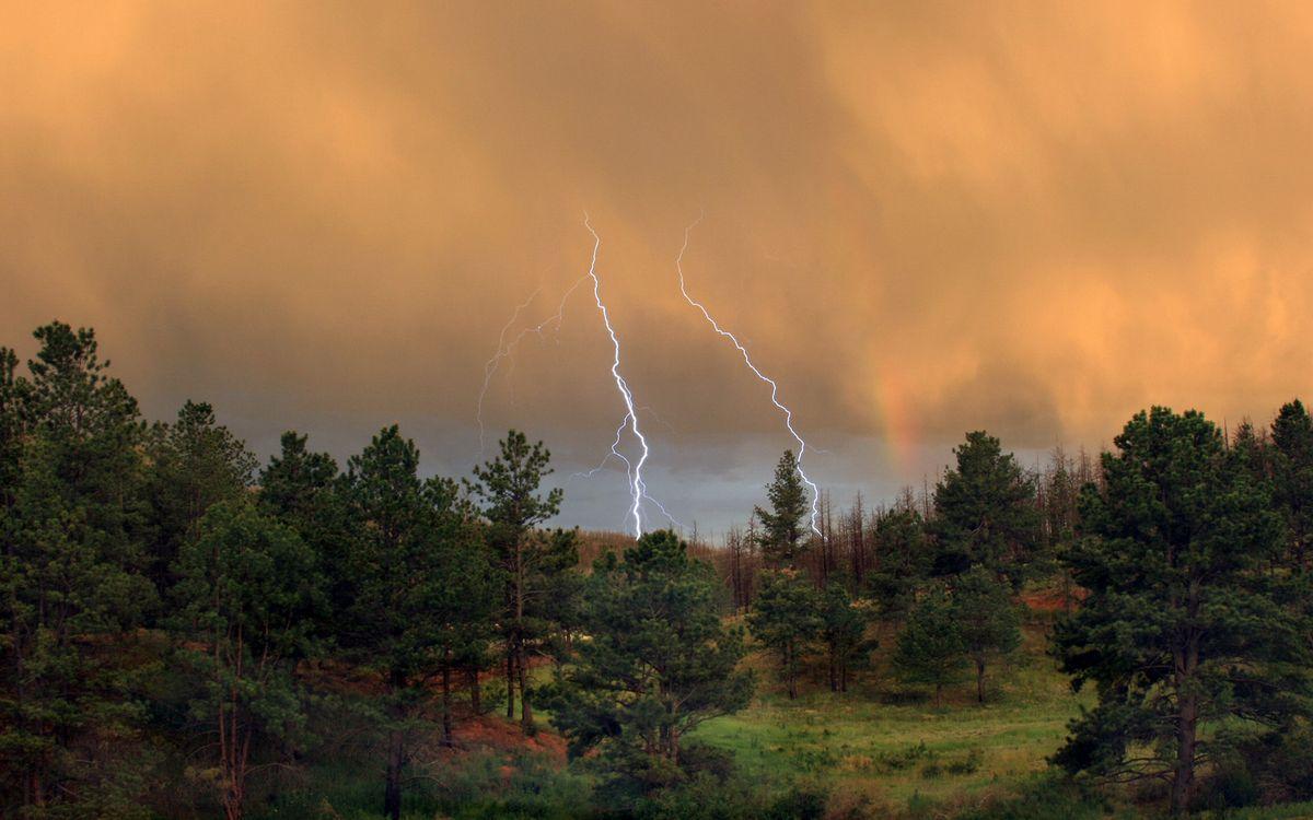 Фото бесплатно лес, деревья, трава, тучи, молния, разряд, природа