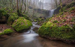 Фото бесплатно осень, речка, лес