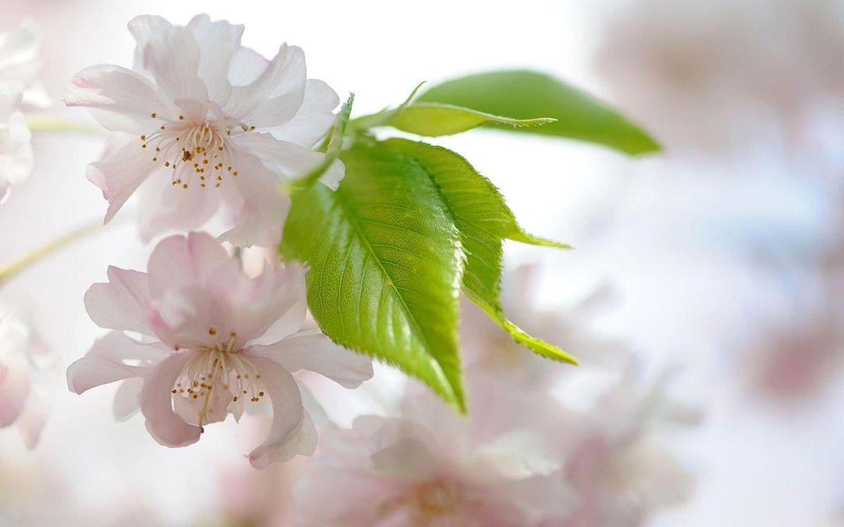 Фото бесплатно цветочки, лепестки, белые, пестики, тычинки, листья, зеленые, цветы