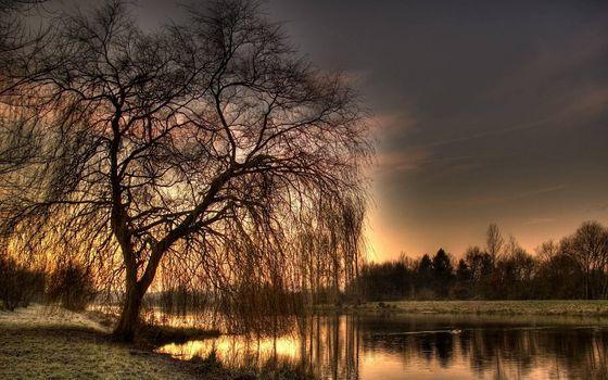 Фото бесплатно берега, трава, деревья