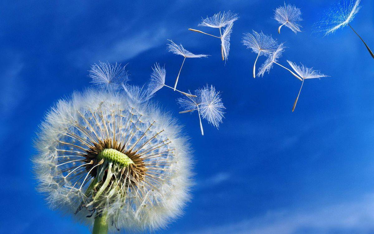 Фото бесплатно небо, семена, одуванчик - на рабочий стол