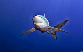 Фото бесплатно акула, морда, пасть, глаза, плавники, море
