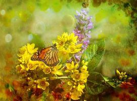 Бесплатные фото цветы,растения,флора,бабочка