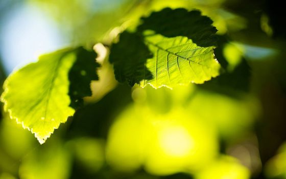 Фото бесплатно листва, лучи солнца, природа