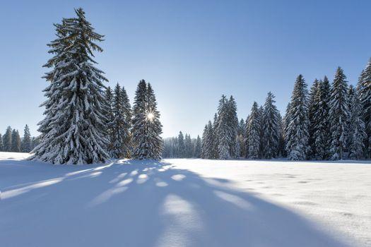 Фото галерея снег, деревья