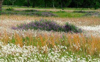 Бесплатные фото лето,трава,цветы,полевые,поляна,природа