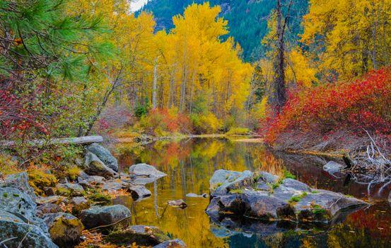 Бесплатные фото Насон-крик,Вашингтон,река,лес,осень,деревья,пейзаж