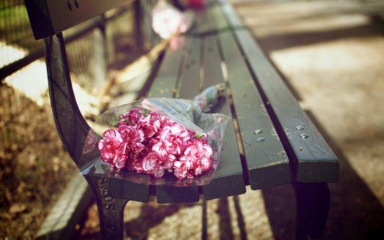 Фото бесплатно лавочка, цветы, букет, капли