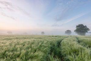 Бесплатные фото поле, деревья, туман, пейзаж