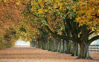 Бесплатные фото осень, парк, аллея, деревья, листва, желтая