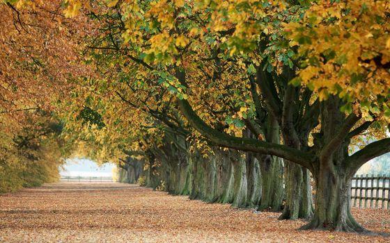 Фото бесплатно желтый, листва, аллея