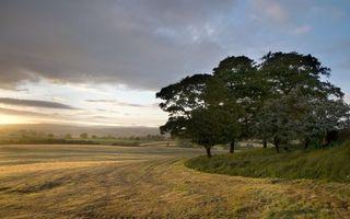 Бесплатные фото поле,трава,деревья,холмы,небо,облака