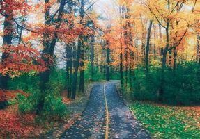 Заставки осень,парк,лес,деревья,дорога,пейзаж