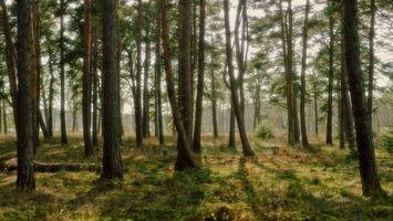 Бесплатные фото лес,деревья,стволы,кустарник,трава