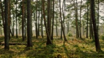 Photo free forest, trees, trunks