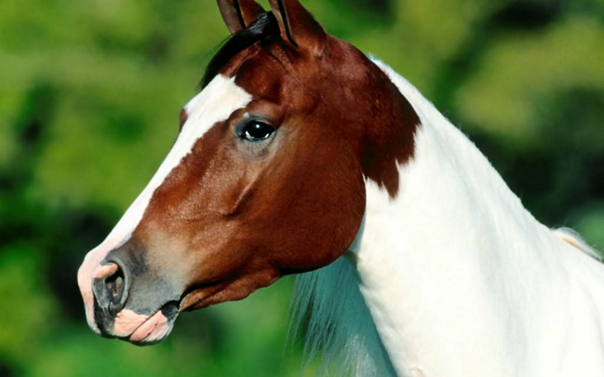 Обои уши, грива, лошадь картинки на телефон