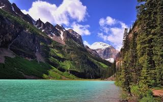Бесплатные фото река,горы,лес,елки,трава,растительность,подножье