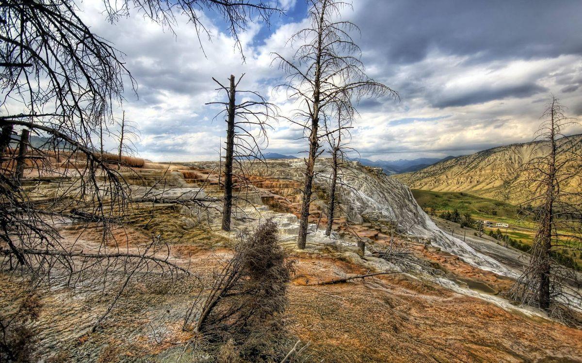 Фото бесплатно сопки, деревья сухие, небо - на рабочий стол