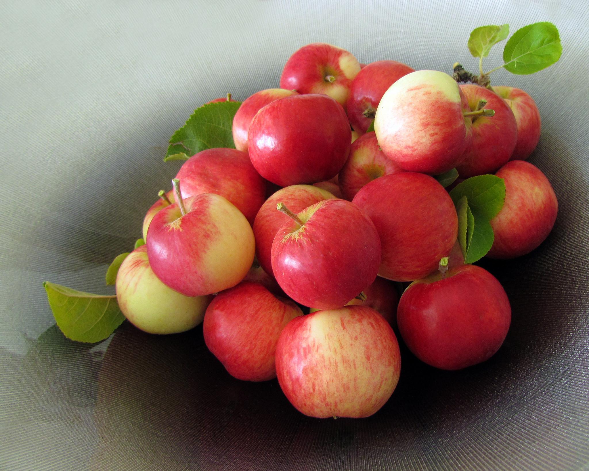 обои яблоки, фрукты, еда картинки фото