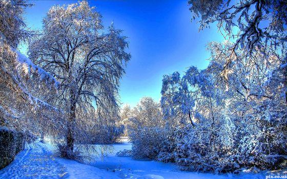 Фото бесплатно зима, природа, зимний пейзаж, снег, деревья