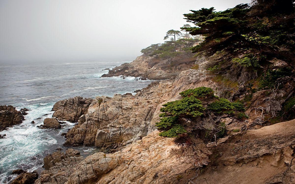 Фото бесплатно деревья, камни, море - на рабочий стол