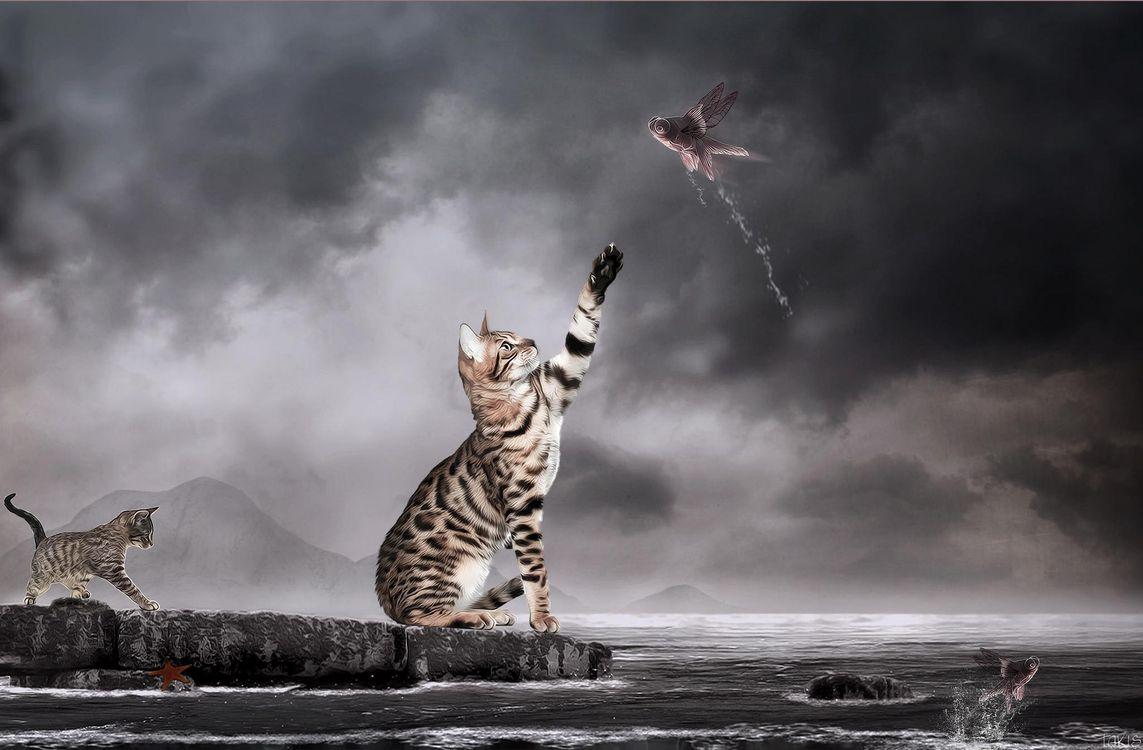 Фото бесплатно кошки, рыбы, art - на рабочий стол