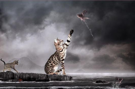Бесплатные фото кошки,рыбы,art,фантастика,photomanipulation