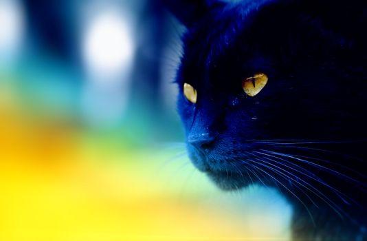 Фото бесплатно кошка, багира, макро