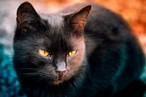 Бесплатные фото кот, кошка, животное, взгляд