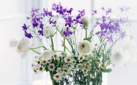 Фото бесплатно ваза, ромашки, цветы полевые