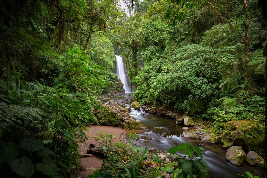 Фото бесплатно лес, деревья, водопад, речка, природа, Коста-Рика - на рабочий стол