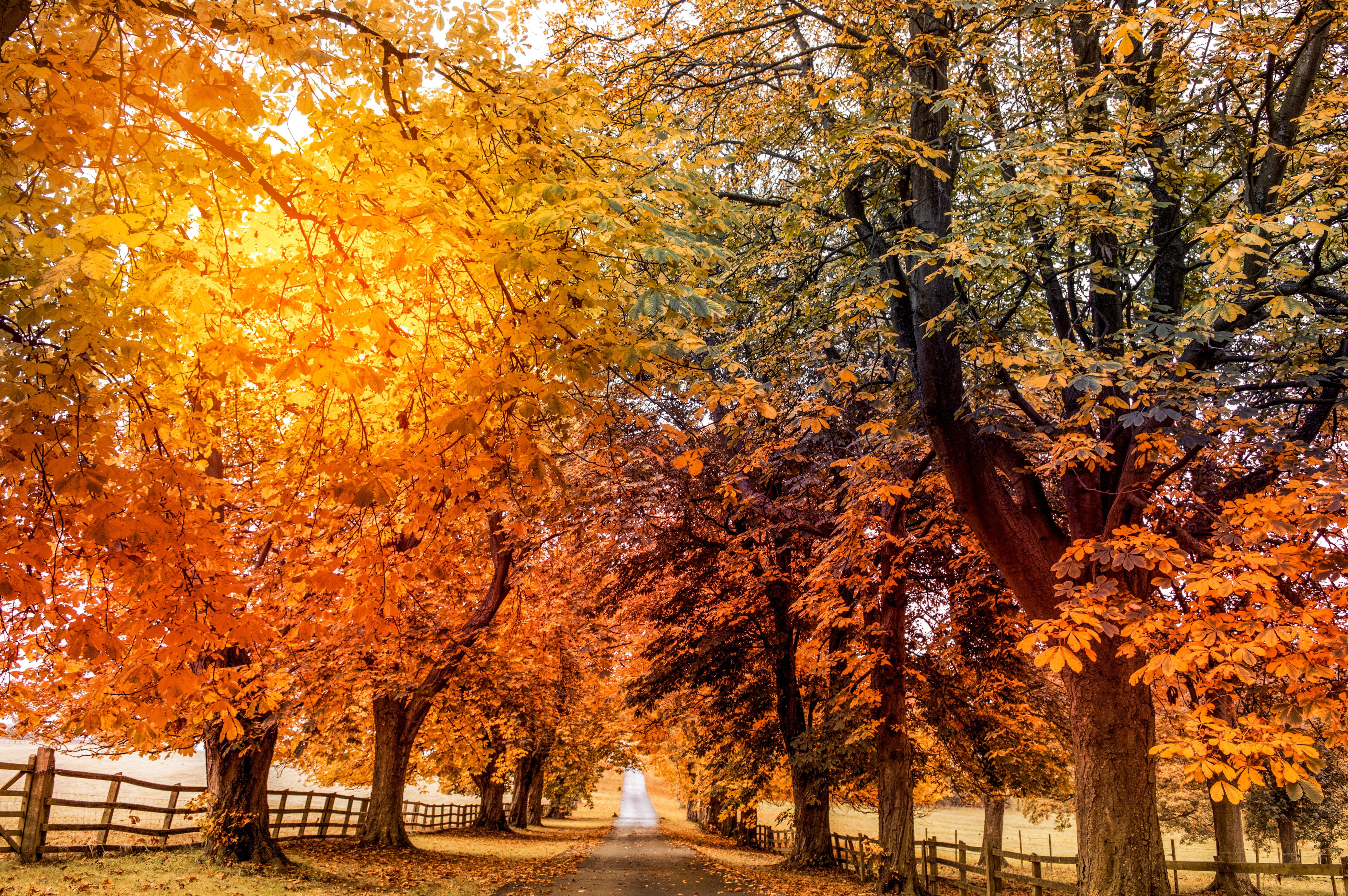 обои осень, дорога, деревья, пейзаж картинки фото