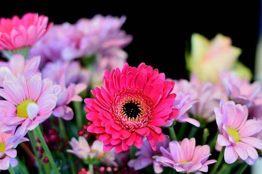 Фото бесплатно Gerbera, герберы, цветы