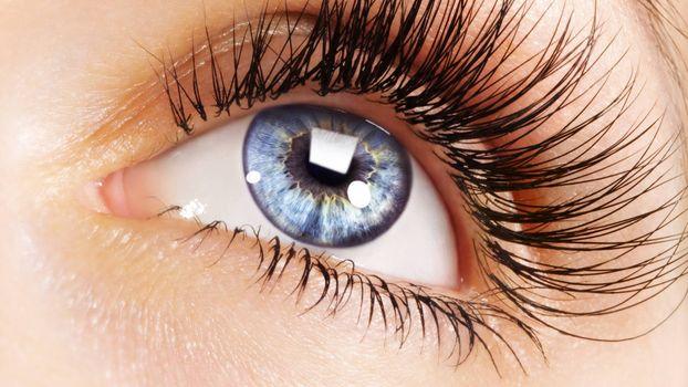 Photo free pupil, eyelid, eyelashes