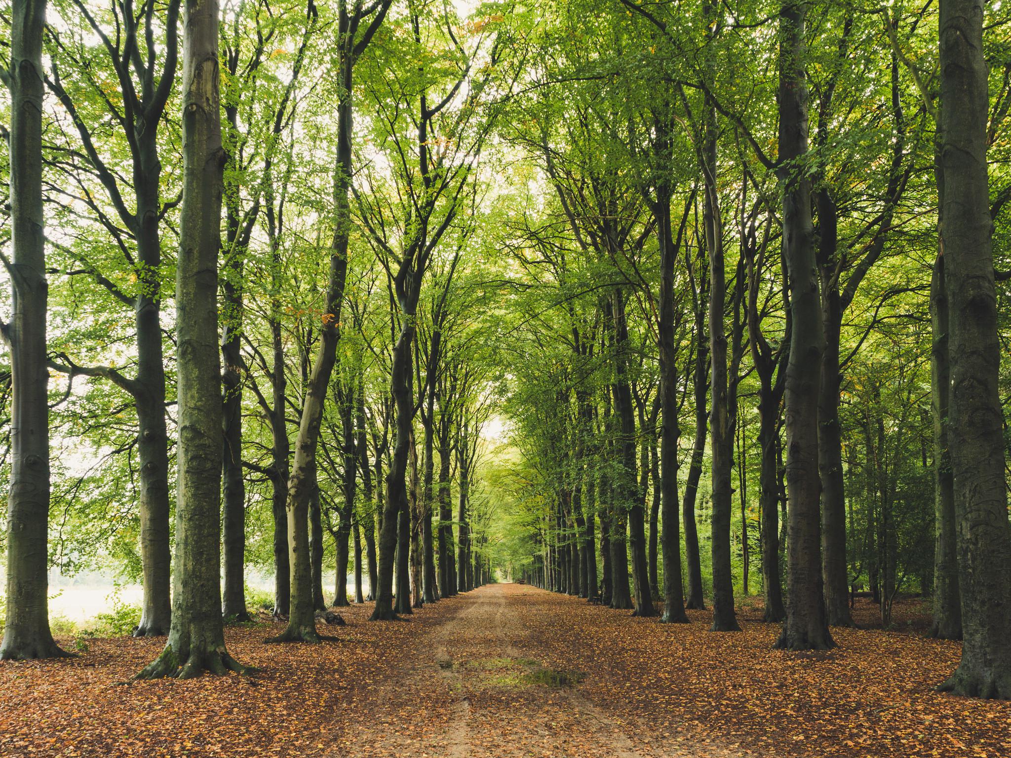 обои лес, деревья, дорога, пейзаж картинки фото
