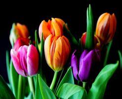 Фото скачать цветы, флора